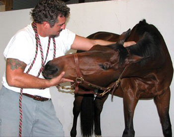 Massage greatly benefits the equine athlete.