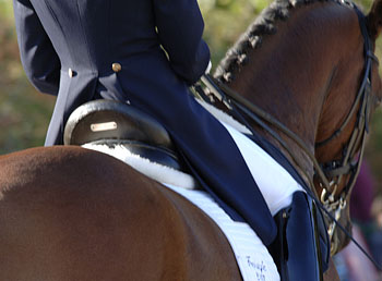 Saddle fit is crucial to a horse's comfort.